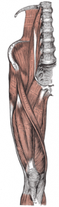 Corked Thigh
