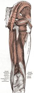 Hamstring Strain