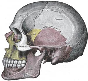 Temperomandibular Joint (TMJ) Pain